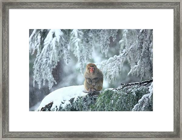 Wild Life At Murree Framed Print