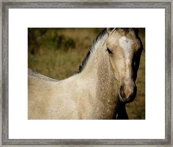 Wild Mustangs Of New Mexico 5 Framed Print