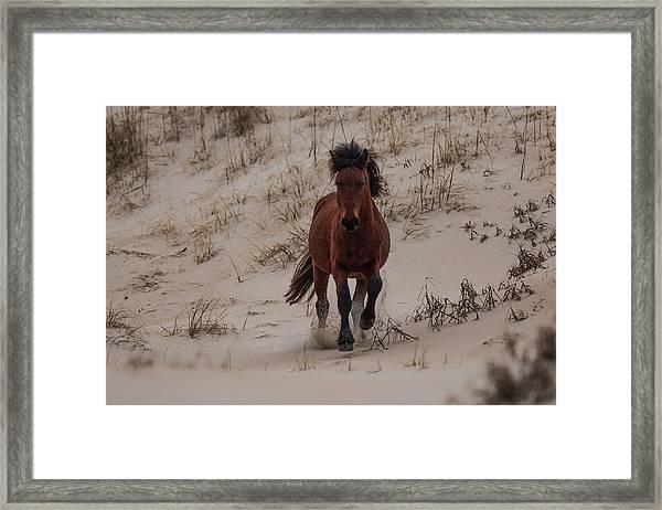 Wild Pony Framed Print