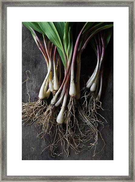 Wild Ramps On Farm Table Framed Print