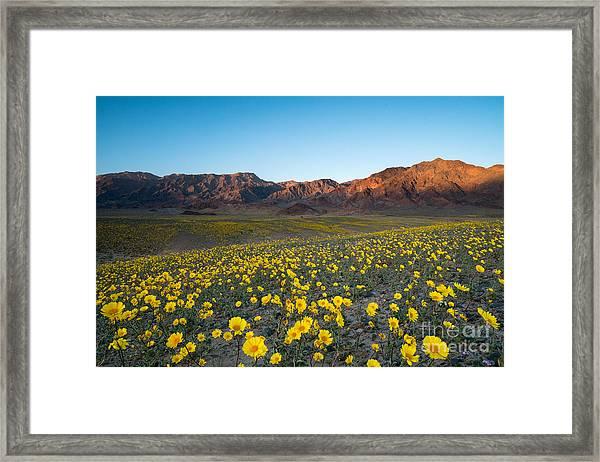 Wildflower Super Bloom In Spring, Death Framed Print
