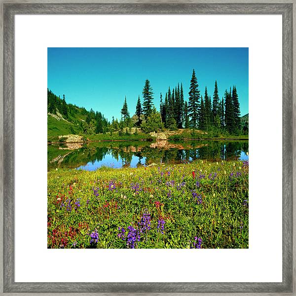Wildflowers And Alpine Lake, Mount Framed Print