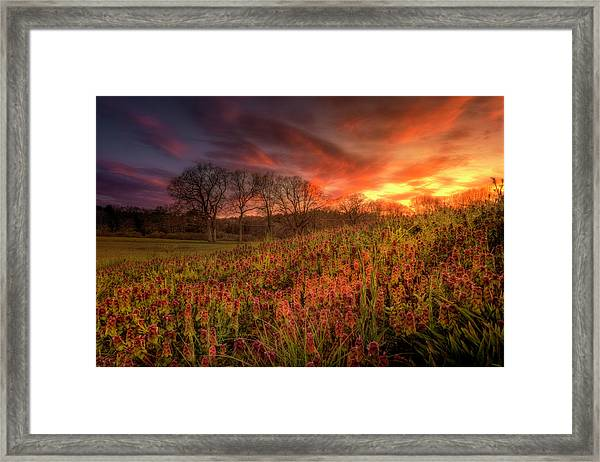 Wildflowers And Wildfire Sky Framed Print