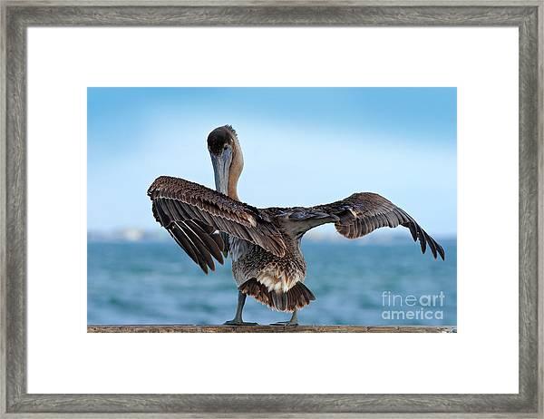 Wildlife Scene From Ocean. Brown Framed Print