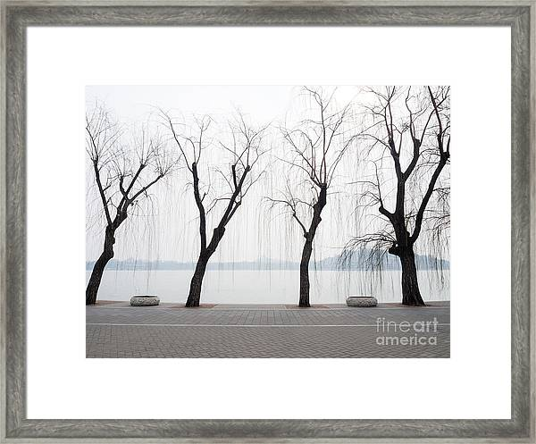 Willow Trees On The Lakeside In Beihai Framed Print