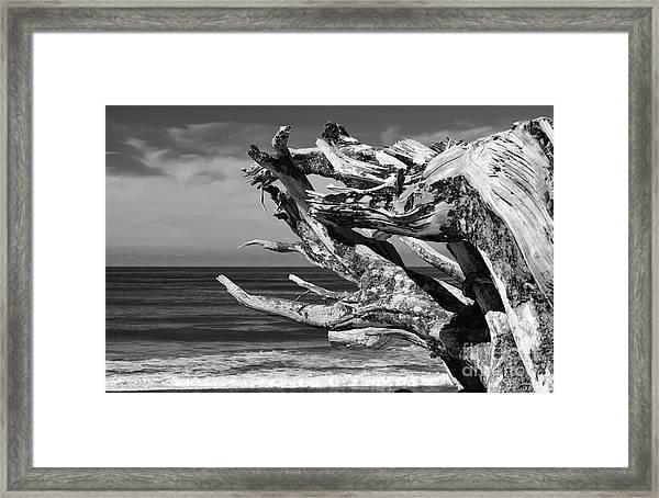 Wind Drift Framed Print