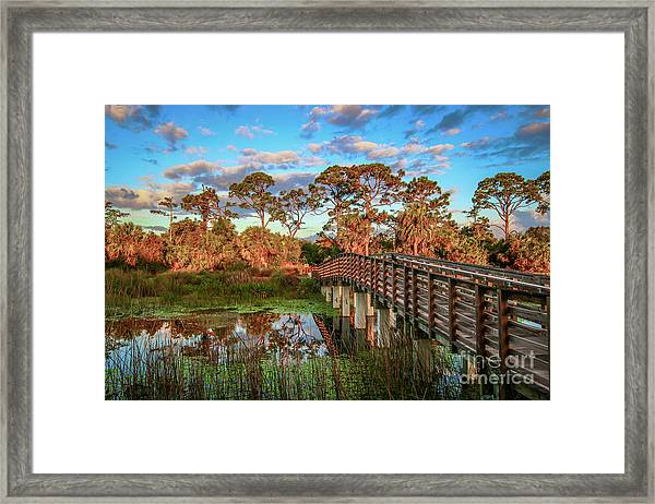 Framed Print featuring the photograph Winding Waters Boardwalk by Tom Claud