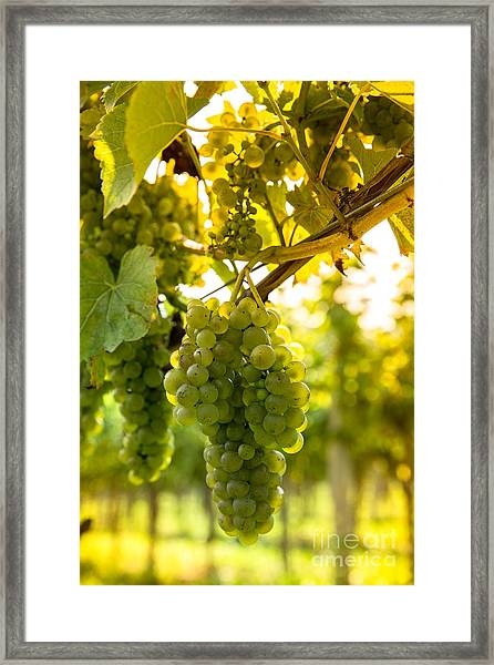 Wine Season Framed Print