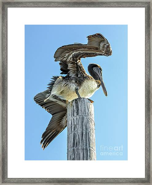 Wings Of A Pelican Framed Print