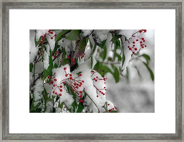 Winter Berries Framed Print