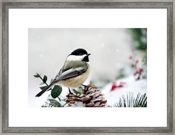 Winter Chickadee Framed Print
