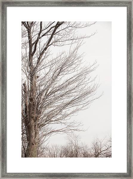 Winter Hoarfrost Framed Print