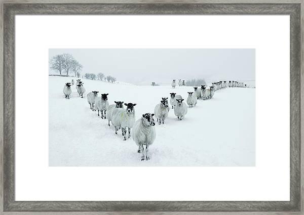 Winter Sheep V Formation Framed Print by Motorider