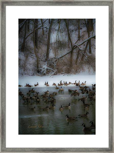 Winter Swim Framed Print