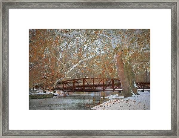 Winter Sycamores Framed Print