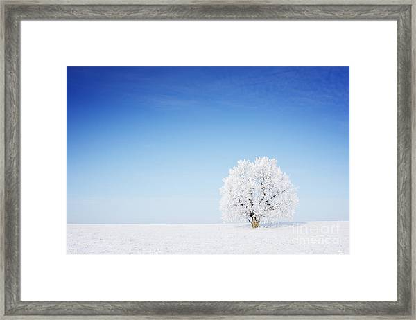Winter Tree In A Field With Blue Sky Framed Print