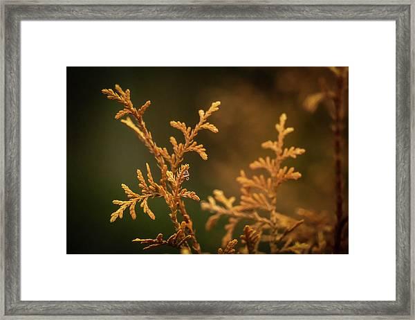 Winter's Hedges Framed Print