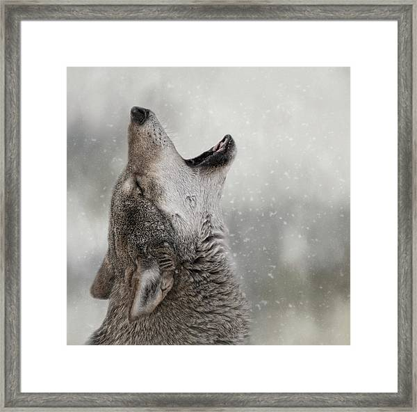 Catching Snowflakes  Framed Print