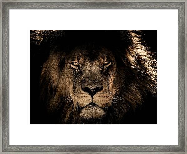 Wise Lion Framed Print