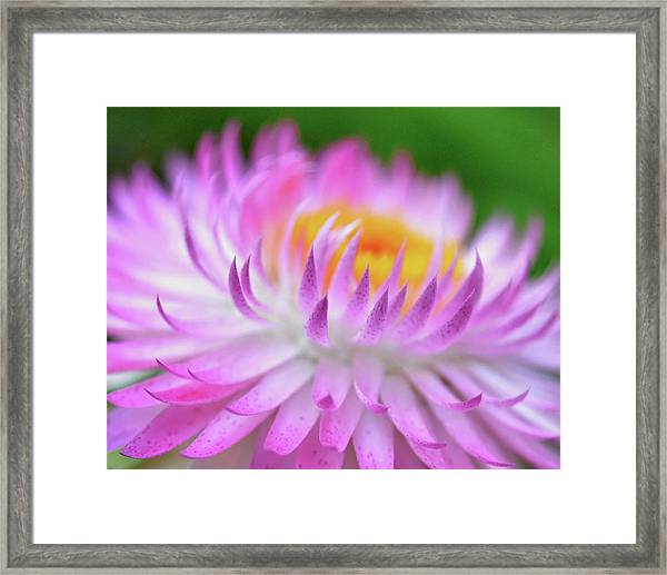 Wishes In Pink  Framed Print