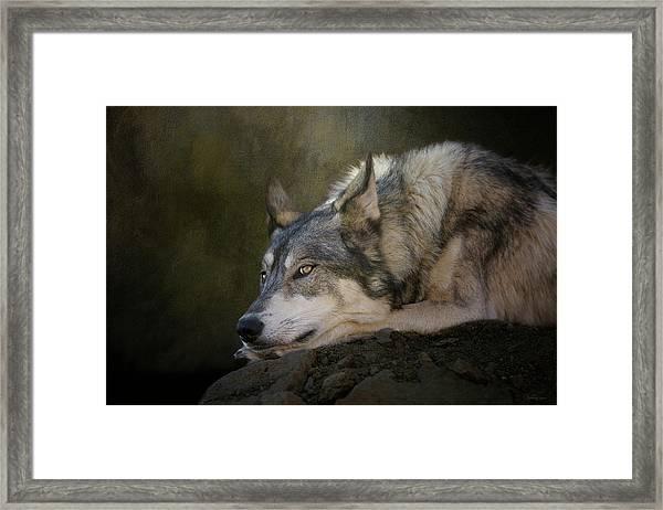 Wolf Watch Framed Print