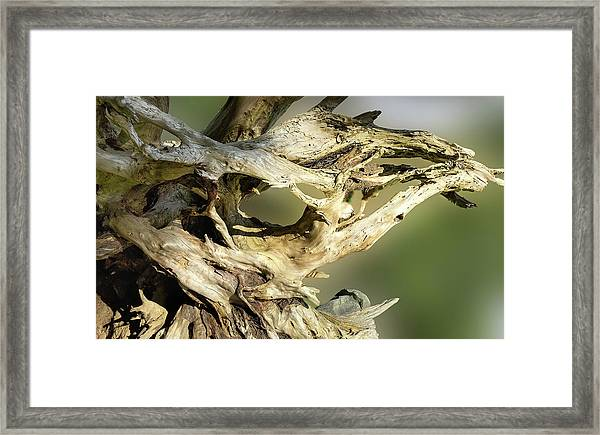 Framed Print featuring the photograph Wood Log In Nature No.14 by Juan Contreras