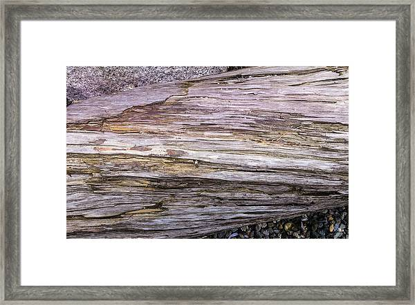 Framed Print featuring the photograph Wood Log In Nature No.28 by Juan Contreras