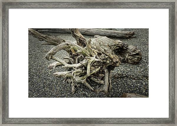 Framed Print featuring the photograph Wood Log In Nature No.34 by Juan Contreras