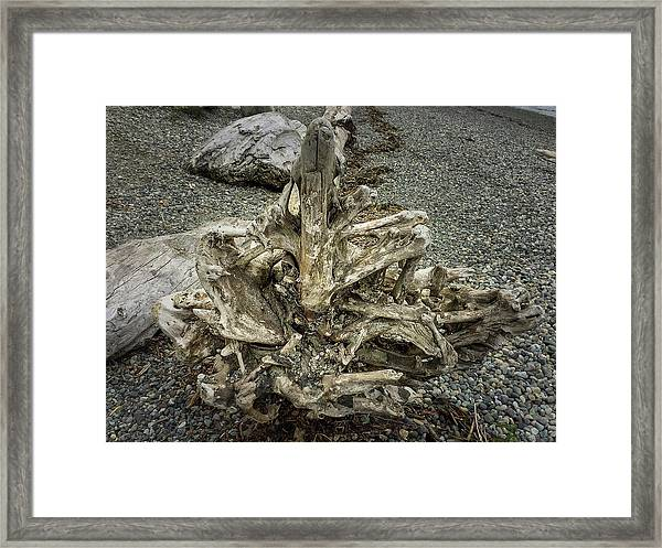 Framed Print featuring the photograph Wood Log In Nature No.36 by Juan Contreras