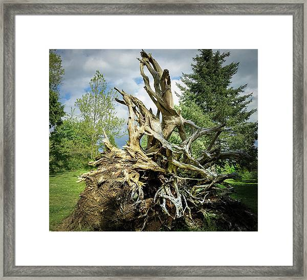 Framed Print featuring the photograph Wood Log In Nature No.6  by Juan Contreras