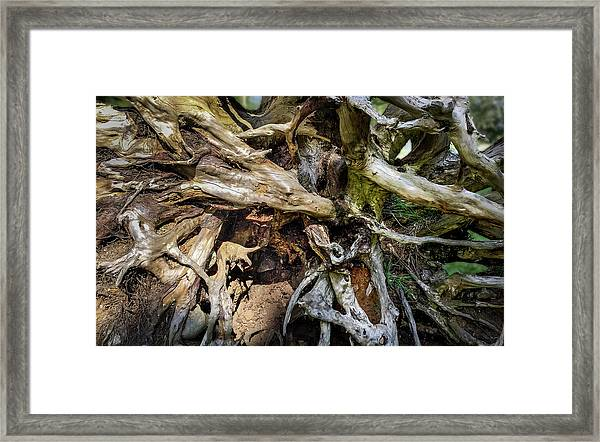 Framed Print featuring the photograph Wood Log In Nature No.8 by Juan Contreras