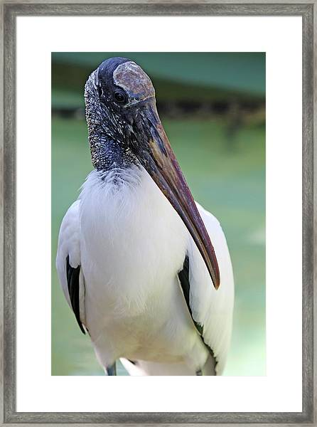 Wood Stork 40312 Framed Print