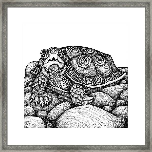 Framed Print featuring the drawing Wood Turtle by Amy E Fraser