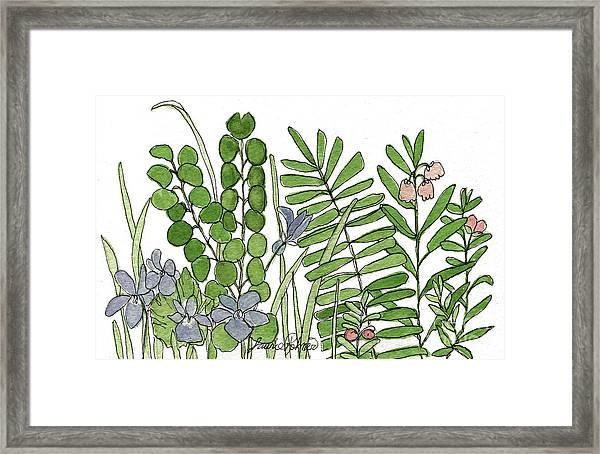 Woodland Ferns Violets Nature Illustration Framed Print
