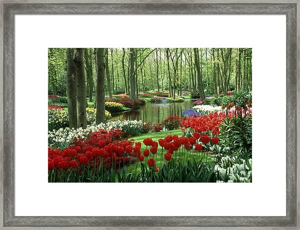 Woods And Stream, Keukenhof Gardens Framed Print