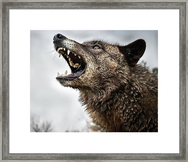 Woof Wolf Framed Print