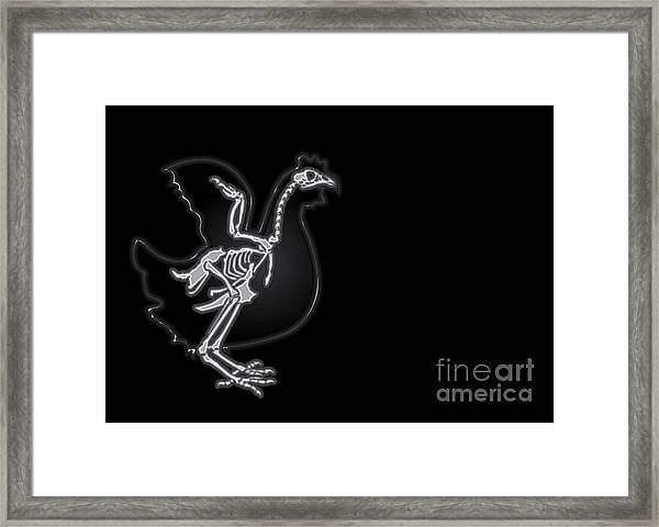 X-ray Vector Chicken Framed Print