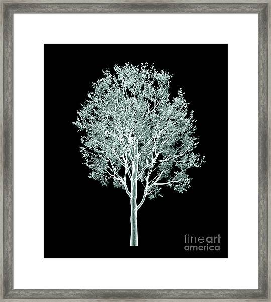 Xray Image Of A Tree Isolated On Black Framed Print