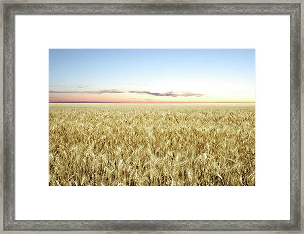 Xxl Wheat Field Twilight Framed Print