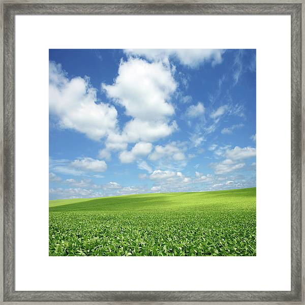 Xxxl Bright Soybean Field Framed Print