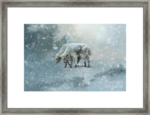 Yaks Calves In A Snowstorm Framed Print