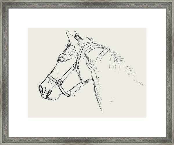 Yearling White Framed Print