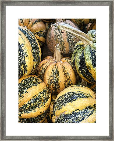 Yellow And Green Pumpkins Framed Print