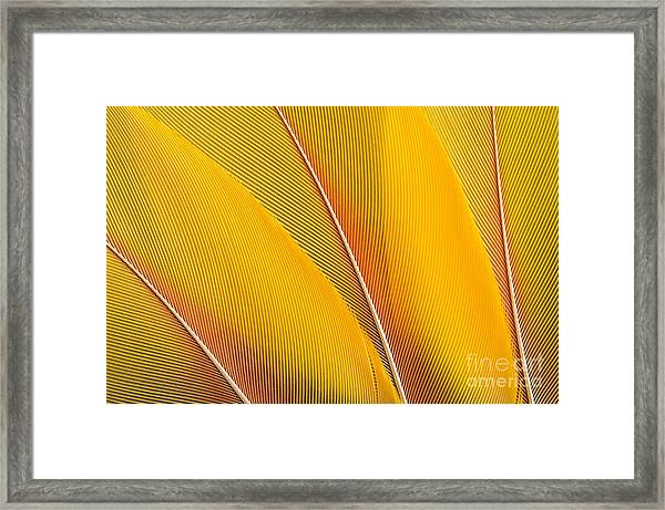 Yellow Feathers Background Composition Framed Print
