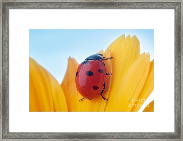 Yellow Flower Petal With Ladybug Under Framed Print