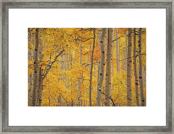 Yellow Forest Framed Print