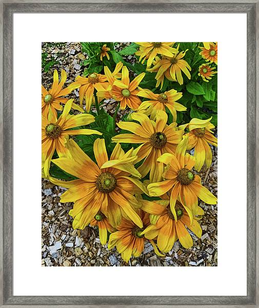 Yellow In Bloom Framed Print