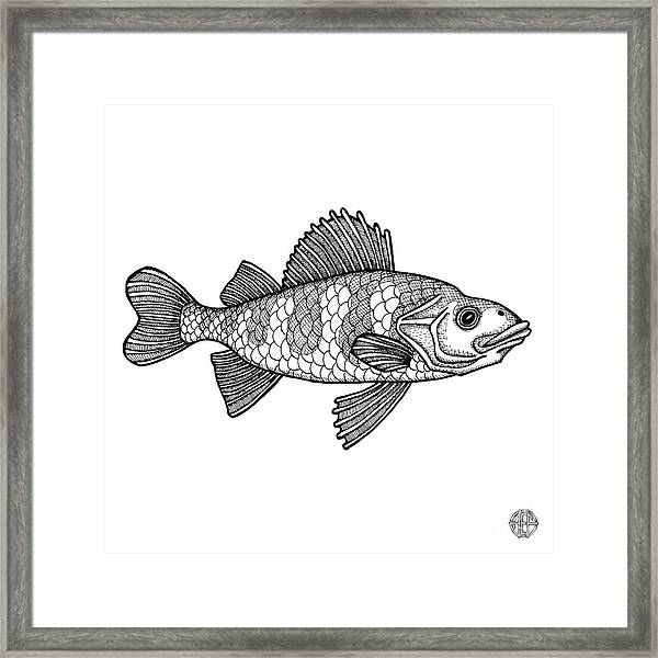 Framed Print featuring the drawing Yellow Perch by Amy E Fraser