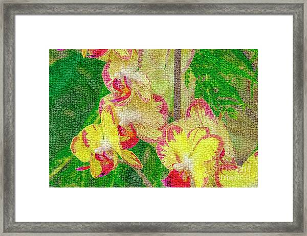 Yellow/rouge Orchids Framed Print