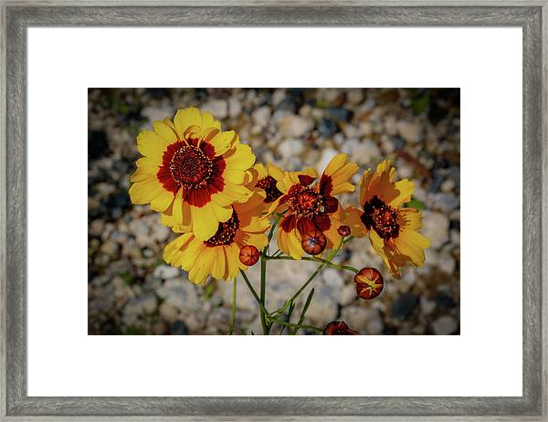 Yellow Wildflowers Framed Print